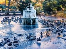 Замороженный фонтан на ледистом озере с утками Стоковое Изображение
