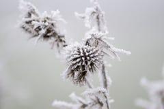 Замороженный цветок касанный к зима Стоковая Фотография RF