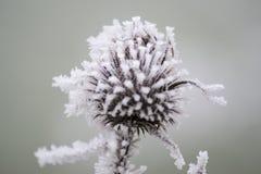 Замороженный цветок касанный к зима Стоковые Фотографии RF