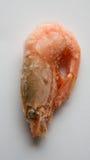 замороженный шримс Стоковые Фотографии RF