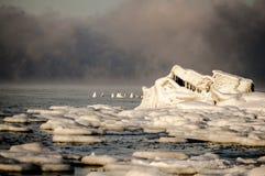 Замороженный Baltic Стоковое Изображение RF