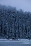 Замороженный Spigot Стоковое Фото