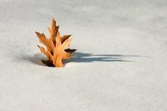замороженный upright Стоковое Фото