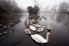 замороженный wildfowl пруда Стоковое Фото
