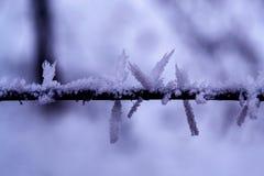 заморожено стоковые фотографии rf