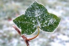 заморожено Стоковая Фотография