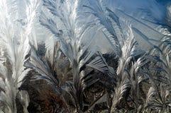 заморожено стоковое изображение rf
