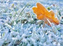 заморожено стоковое изображение