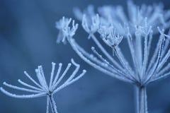 заморозки Стоковое Изображение