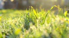 Заморозок весны, весна изморози, заводы предусматриванные с заморозком весной акции видеоматериалы