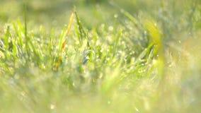 Заморозок весны, весна изморози, заводы предусматриванные с заморозком весной сток-видео