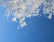заморозок ветвей Стоковое фото RF