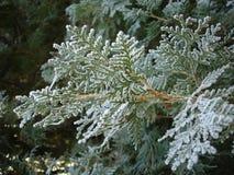 заморозок ветви Стоковые Фото