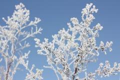 заморозок ветви стоковое фото rf