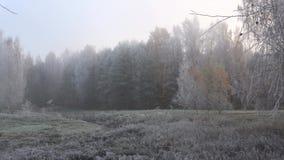 Заморозок в лесе, туманное утро утра в октябре акции видеоматериалы