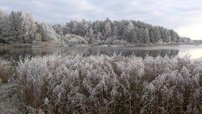 Заморозок в октябре на озере леса Зона Псков, Россия сток-видео