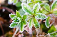 заморозок в утре   Стоковое Изображение