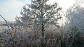 Заморозок гололеди на верхних частях дерева деревьев вербы в зиме против голубого неба видеоматериал