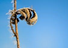 заморозок декора естественный Стоковые Фото