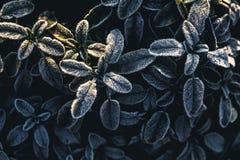 Заморозок на листьях Стоковая Фотография RF