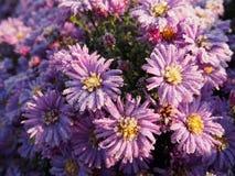 Заморозок на цветках Морозное утро покрытое с цветками заморозка на заводах o стоковое изображение