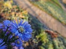 Заморозок на цветках Морозное утро покрытое с цветками заморозка на заводах o стоковые фото