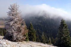 заморозок осени Стоковое Изображение RF