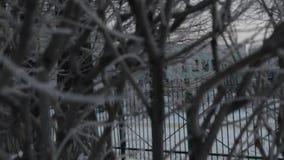Заморозок предпосылки зимы на ветвях Взгляд через ветви дерева на день зимы хмурый сток-видео