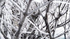 Заморозок предпосылки зимы на ветвях Взгляд через ветви дерева на день зимы хмурый акции видеоматериалы
