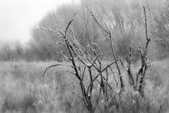 заморозок тяжелый Стоковые Фото