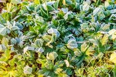 Заморозок утра в саде Стоковые Изображения RF
