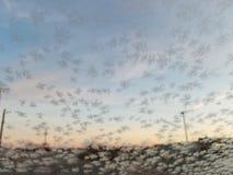 Заморозок утра стоковое фото rf