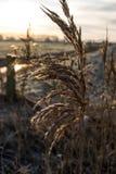 Заморозок утра стоковое изображение rf