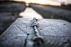 Заморозок утра стоковые фотографии rf