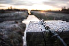 Заморозок утра стоковое фото