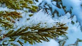 Заморозок Стоковое Изображение RF