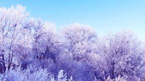 Заморозок Стоковые Изображения