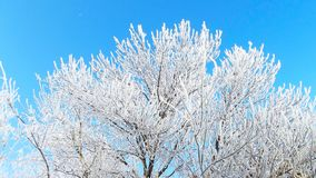Заморозок Стоковое Фото