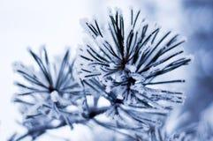 заморозок Стоковая Фотография