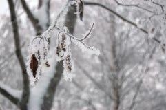 заморозок Стоковые Фото