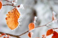 заморозок Стоковое Изображение