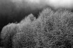заморозок Стоковая Фотография RF