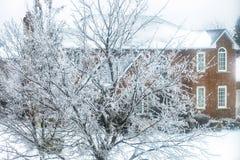 Заморозьте покрытые деревья после замерзающего дождя в Торонто, Онтарио, c Стоковые Изображения