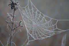 заморозьте сеть паука Стоковое Изображение