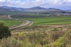 Замотка дороги через виноградники стоковое фото rf