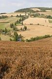 замотка Тосканы дороги кипарисов Стоковое Изображение