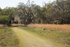 Замотка тропы через Флориду scrub на равенстве Kissimmee озера Стоковое Фото