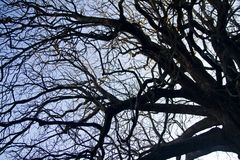 замысловатость на ветвях дерева стоковая фотография rf