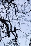 замысловатость на ветвях дерева стоковые изображения