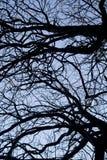 замысловатость на ветвях дерева стоковое фото rf